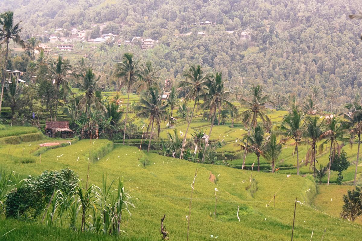Rural Bali see real Bali Munduk what to do in Munduk (25 of 25)