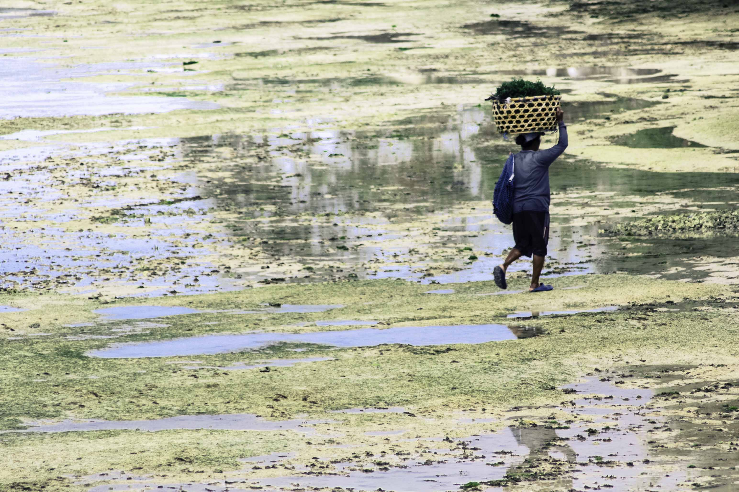 Seaweed farms Nusa Ceningan (8 of 33)